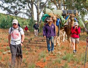 Flinders Camel Trek